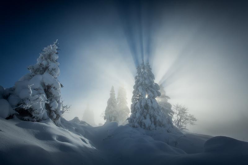Sapin sous la neige / France - Pic Saint Michel - 38